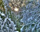 Припорошены снежком