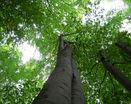 Листва кроны деревьев