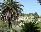 Пальма -тропическая красотка