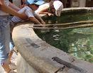 Каменный бассейн