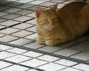 Рыжий полостатый мяу лежит на полу с подогнутыми лапками