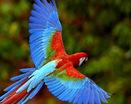 Красивый попугай в полете
