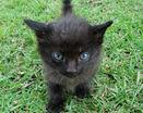 Я?! Черный котенок?! Я чёрная пантера!