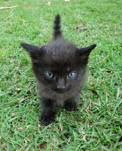 Я черный котенок я чёрная пантера